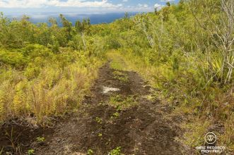 The fertile volcanic soil of Réunion is excellent to grow world-class vanilla