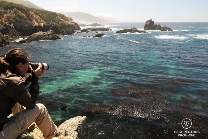 Checking out Sea Otter along Big Sur, USA
