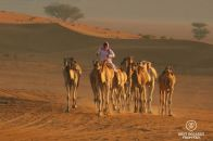 Camel riding in the Omani desert