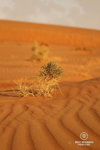 Life in the desert, Oman