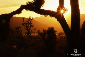 Sunset in Joshua Tree National Park, USA