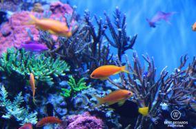 Tropical tank at the Monterey Bay Aquarium, Monterey, USA