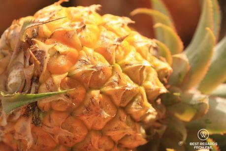 Pineapple, Saint Pierre market, Reunion Island, France