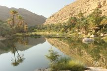 Wadi Bani Khalid in the early morning, Oman