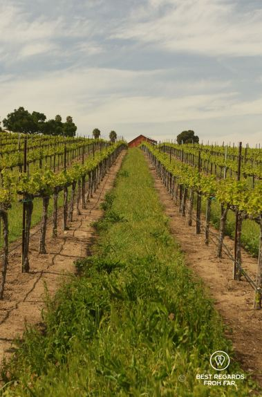 Behind the Scenes Wine Tours: a different perspective on wine, California, USA