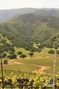The vineyards of the Santa Lucia Highlands, Behind the Scenes Wine Tours, Salinas, California, USA