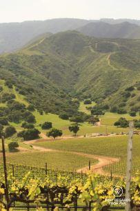 The vineyards of the Santa Lucia Highlands, Salinas, California, USA