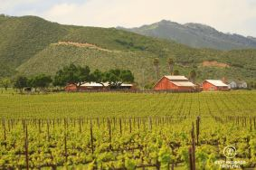 View on the vineyards and rolling hills, Behind the Scenes Wine Tours, California, USA