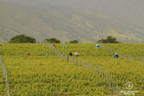 Working the fields, Behind the Scenes Wine Tours, California, USA