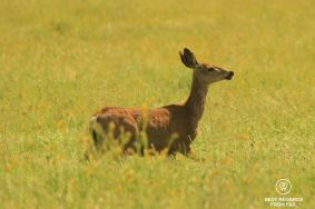 Wildlife is abundant in the valley and seeing deers and coyotes is not a rarity, Salinas Valley, USA