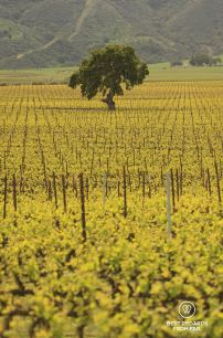 The vineyards of the Santa Lucia Highlands, Behind the Scenes Wine Tours, California, USA