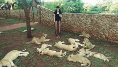 Volunteering with Lions in South Africa, photo credit Beth Jennings