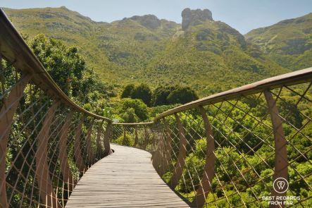 The famous canopy walk, Kirstenbosch Botanical Garden, Cape Town, South Africa