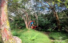 Mountain biking down the Maïdo, Reunion Island