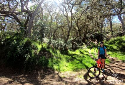 Downhill mountain biking the Maïdo through the highland tamarind forest, Reunion Island