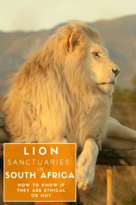 Lion Sanctuaries 2 - Pinterest Pin - South Africa(2)