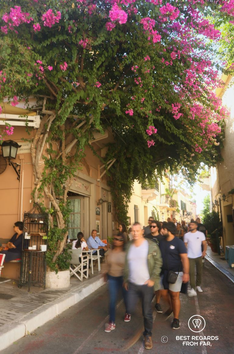 Blooming purple flowers above a street through which people stroll on a sunny day, Athens, Greece.