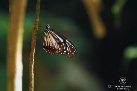 Butterfly along the Dragon's Back hike, Hong Kong Island