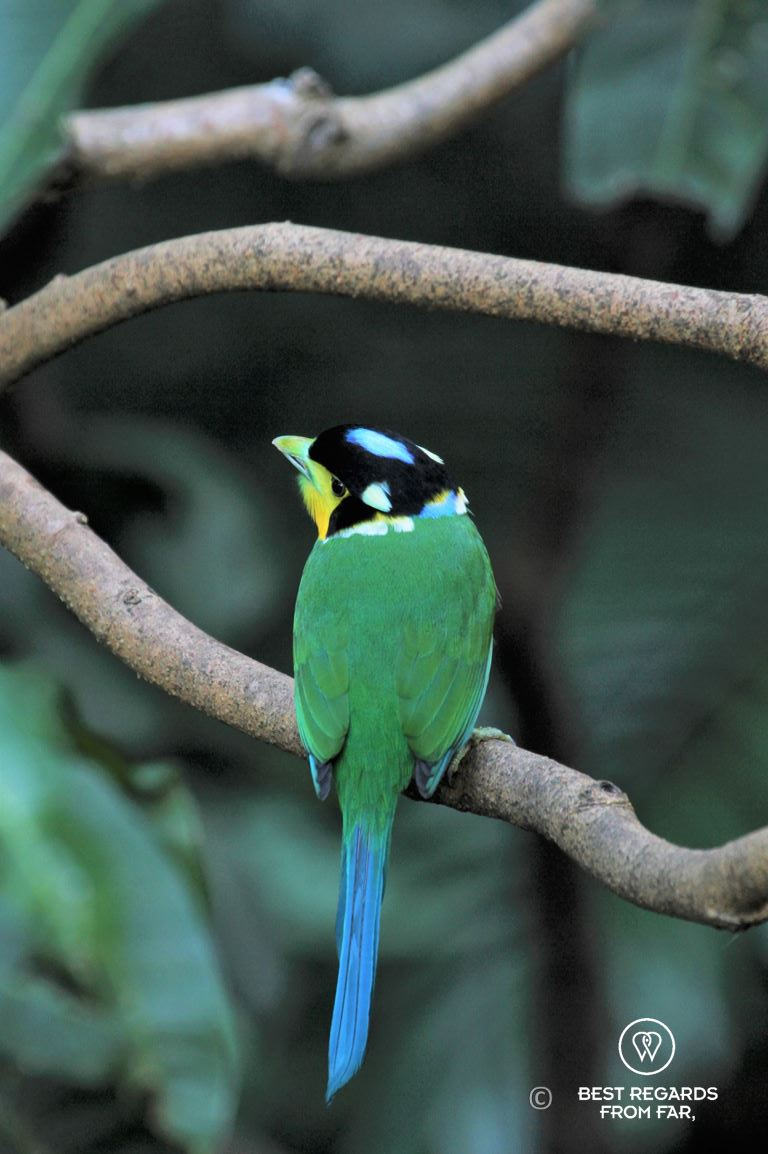 Colorful exotic bird at the Edward Youde Aviary in Hong Kong Park