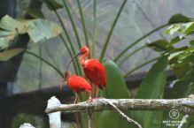 Red Ibis, Hong Kong Zoological and Botanical Gardens, hiking Victoria Peak, Hong Kong