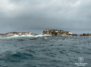 The Duiker Island Seal colony from the water in Hout Bay by Cape Town, South Africa