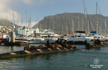 Seals tanning in the sun in the harbour of Hout Bay close to Cape Town, South Africa