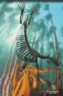 The skeleton of a Cape Fur Seal among the kelp forest at the 2 Oceans Aquarium in Cape Town, South Africa