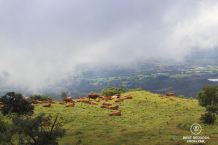Fertile grounds on the Plaine des Remparts, on the way to the top of the Piton de la Fournaise, Reunion Island, France
