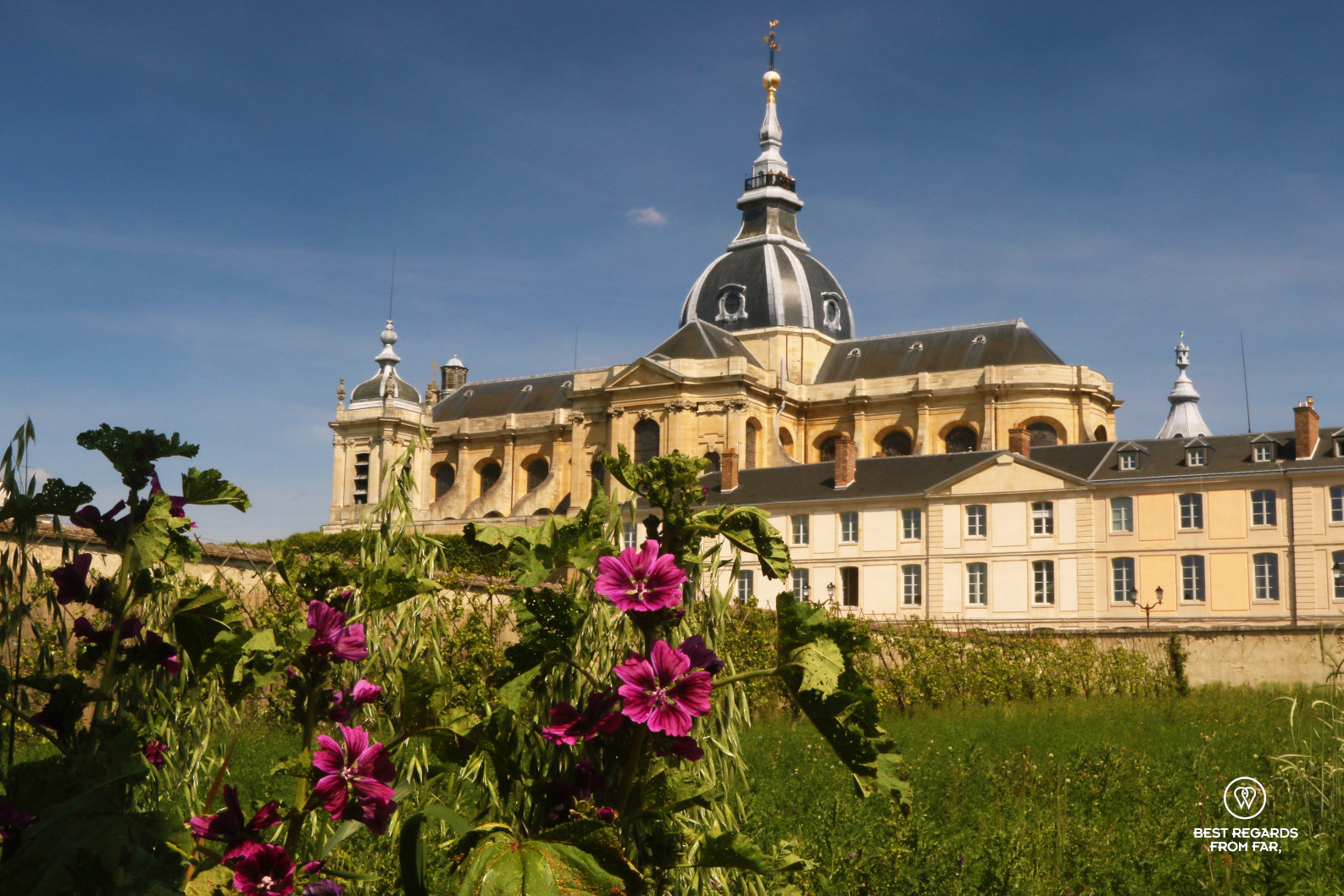 Purple flowers from the King's Kitchen Garden in Versailles with the cathedral in the background.