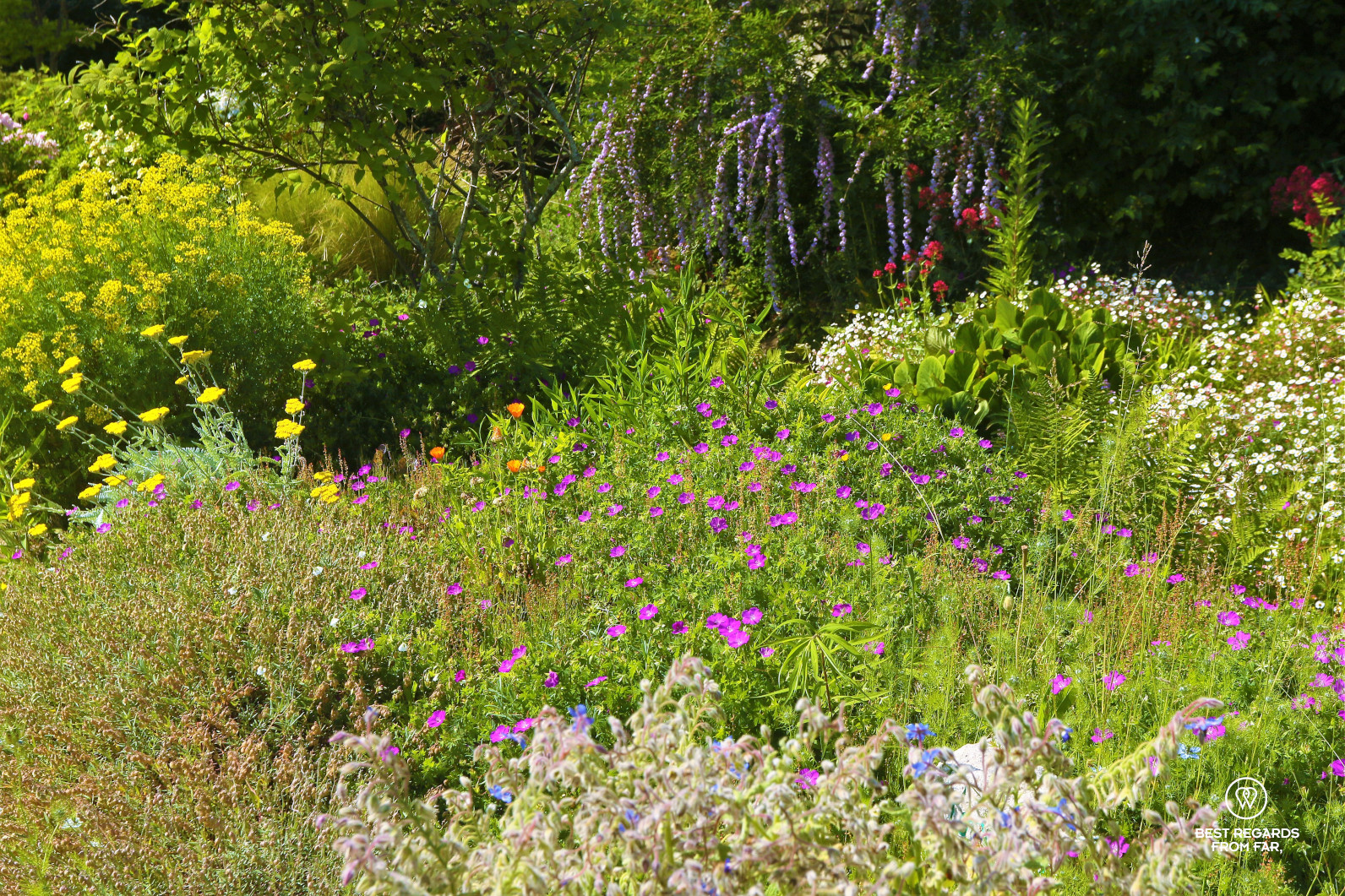 Colourful flowers at the King's Kitchen Garden in Versailles.