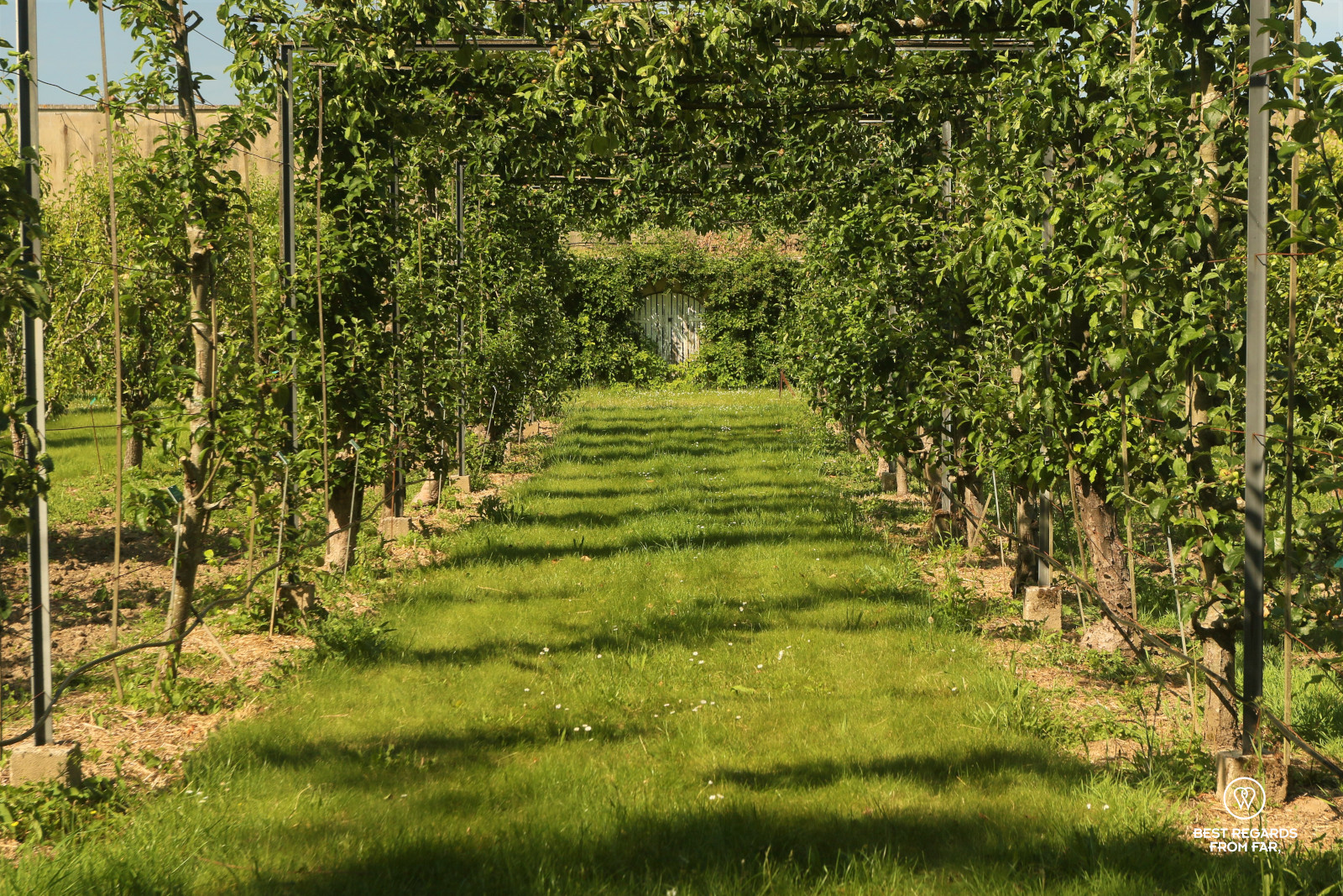 Orchard at the King's Kitchen Garden in Versailles.