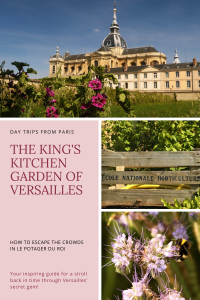 The King's Kitchen Garden in Versailles with a bumblebee feeding on a purple flower.