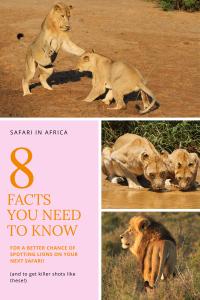 Safari - Lions - Pinterest PIN - South Africa