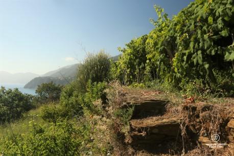 Blue skies and vineyards by the seaside in Italie