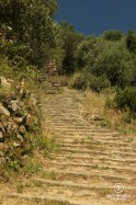 Staircase made of old stones leading into a forest