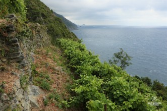 The view from Possa's vineyard in Riomaggiore on the Ligurian Coast, Porto Venere and Cinque Terre!