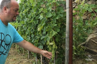 Heydi Bonanini, the owner of Possa vineyards, showing the grape selection process in his Cinque Terre vineyards.