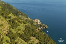 The view on the vineyards above Manarola, Cinque Terre