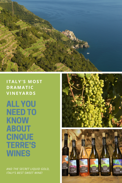 Vineyards on a slope above the sea, grapes and bottles of wine in Italy