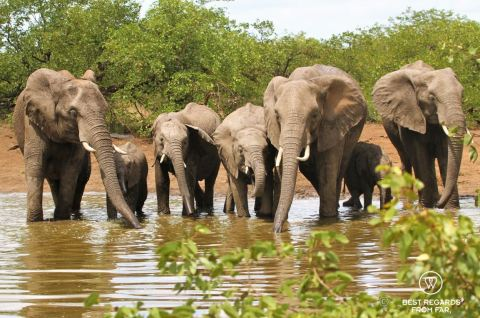 7 elephants facing the camera while drinking by a waterhole in the sun, South Africa