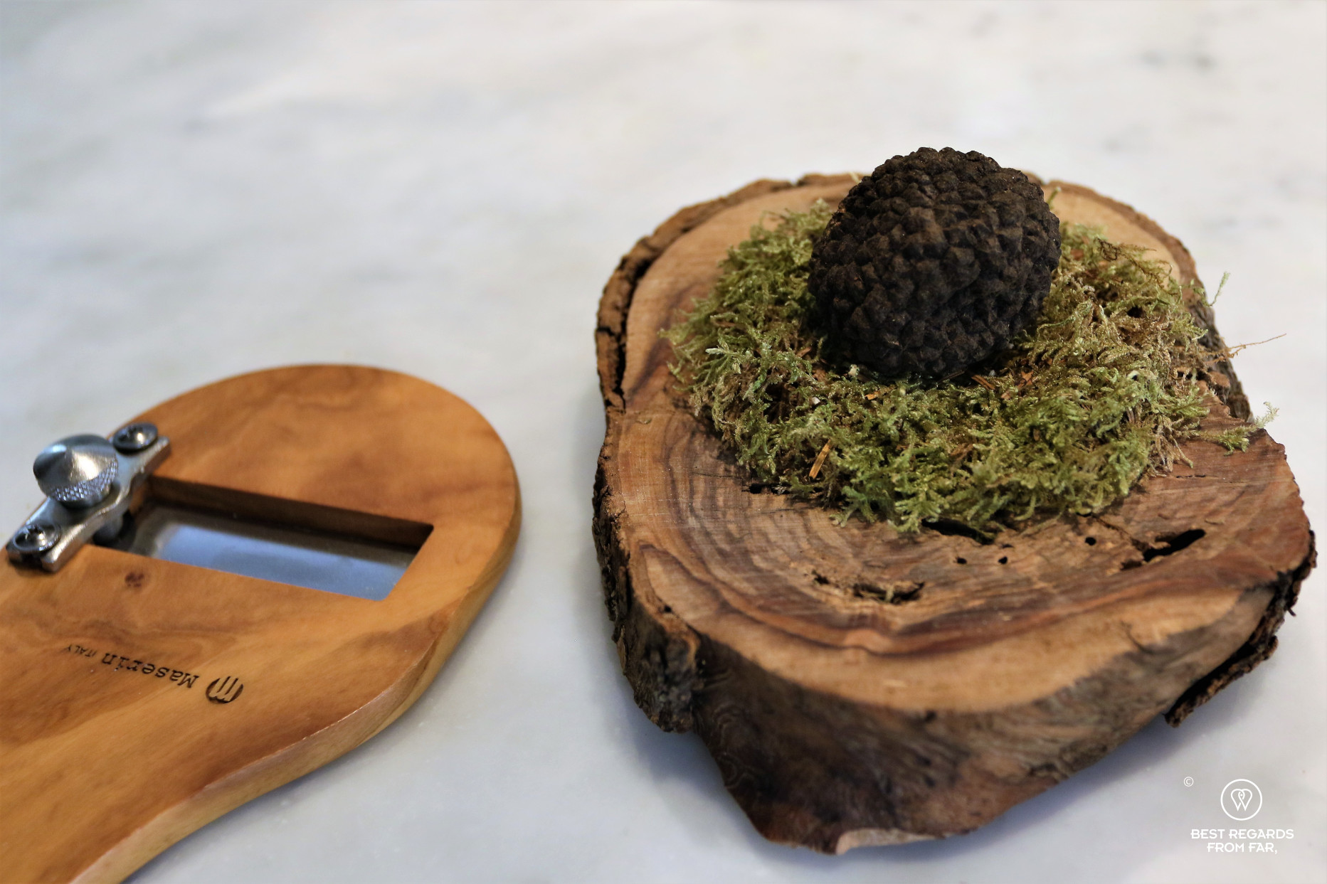 Truffle on green moss on a wooden disk