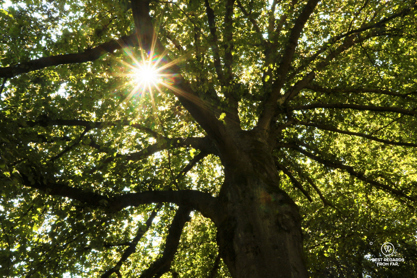 Sun rays piercing through the leaves of an old tree