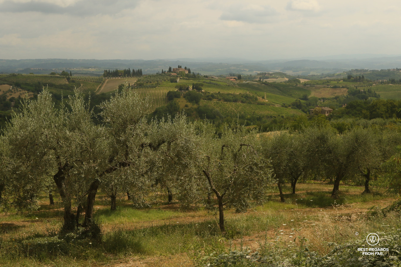 Tuscan landscapes: olive groves and vineyards on the hills