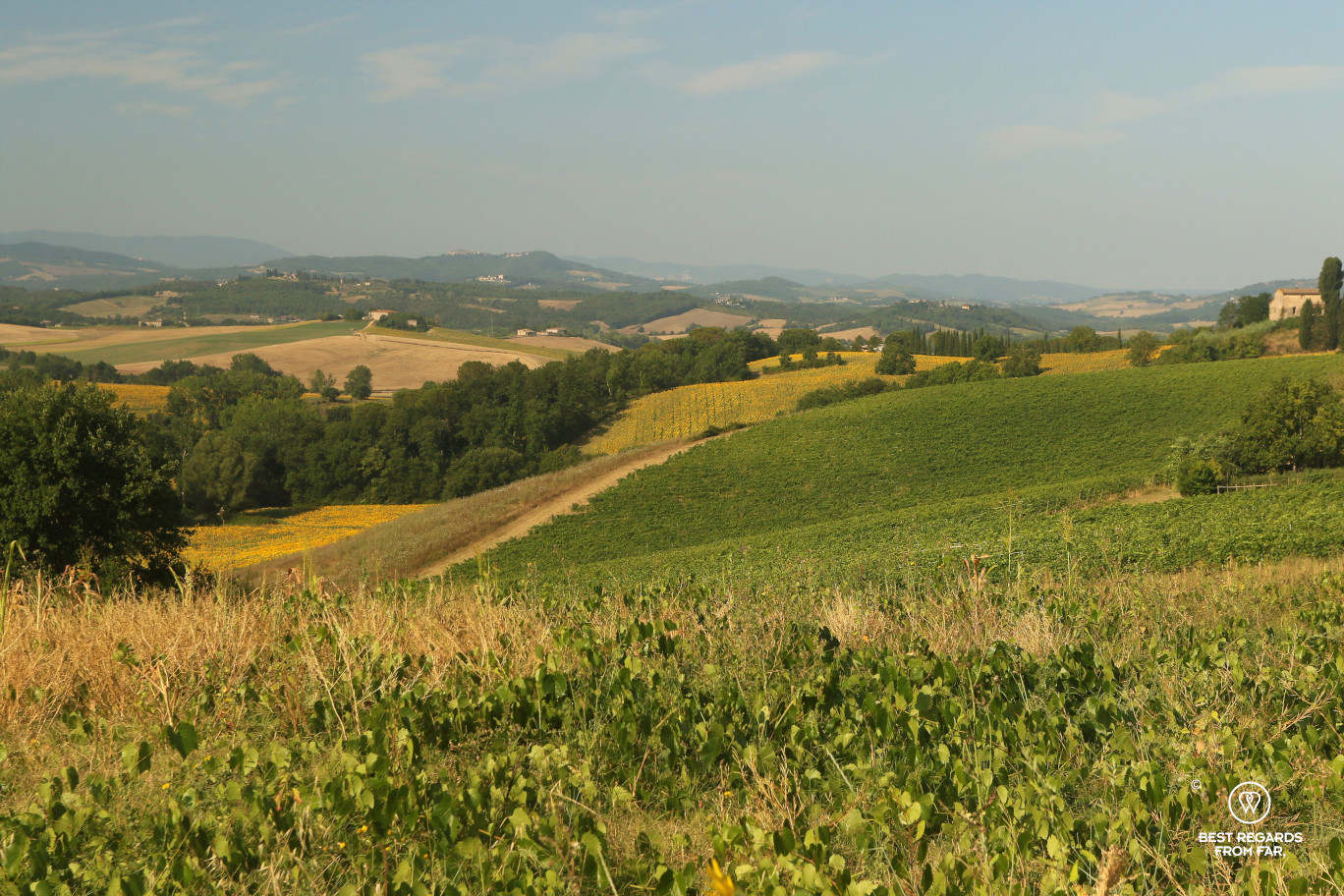 Tuscan landscape with sunflower fields on the hills, Italy