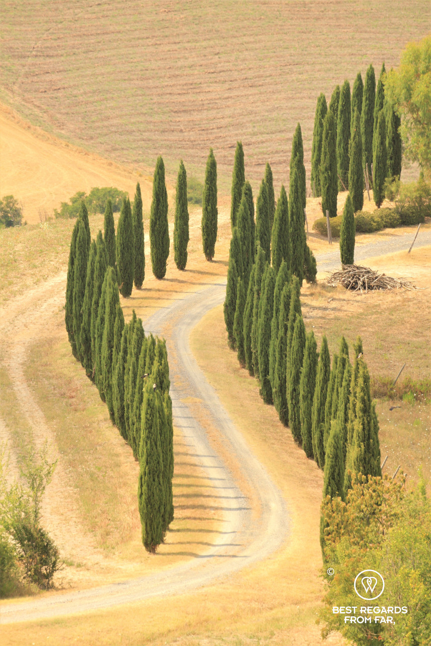 A typical Tuscan alley lined with cypress trees, Italy