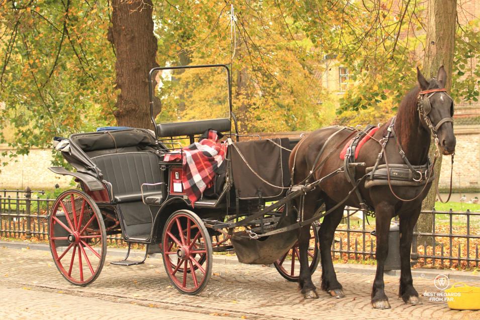 A horse carriage in Bruges, Belgium