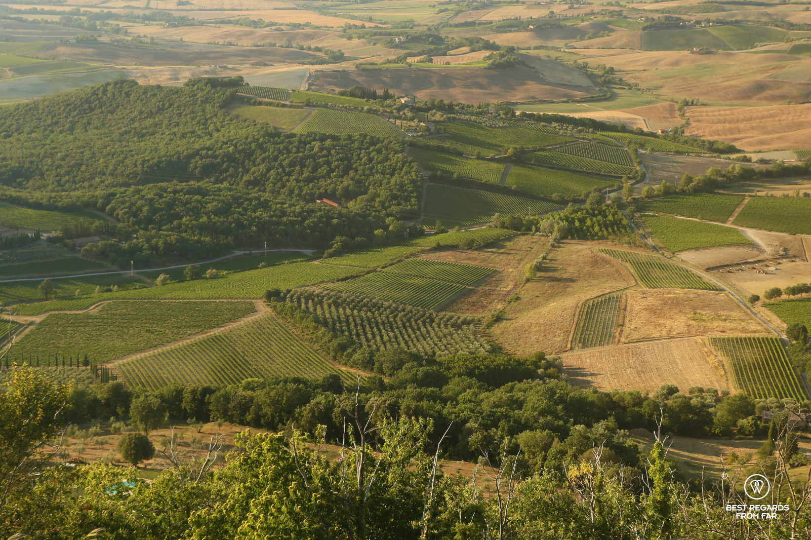 Typical Tuscan landscapes with vineyards in Italy