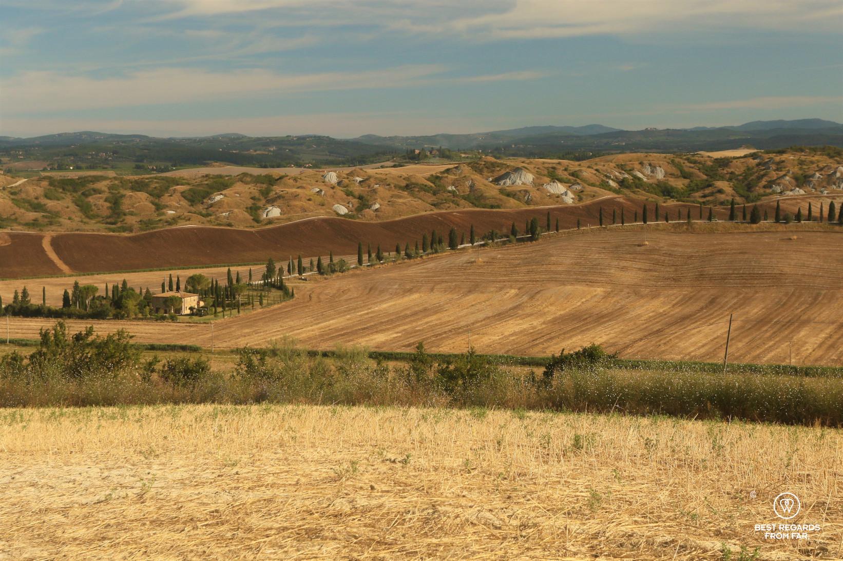 Wheat fields of Tuscany, Italy