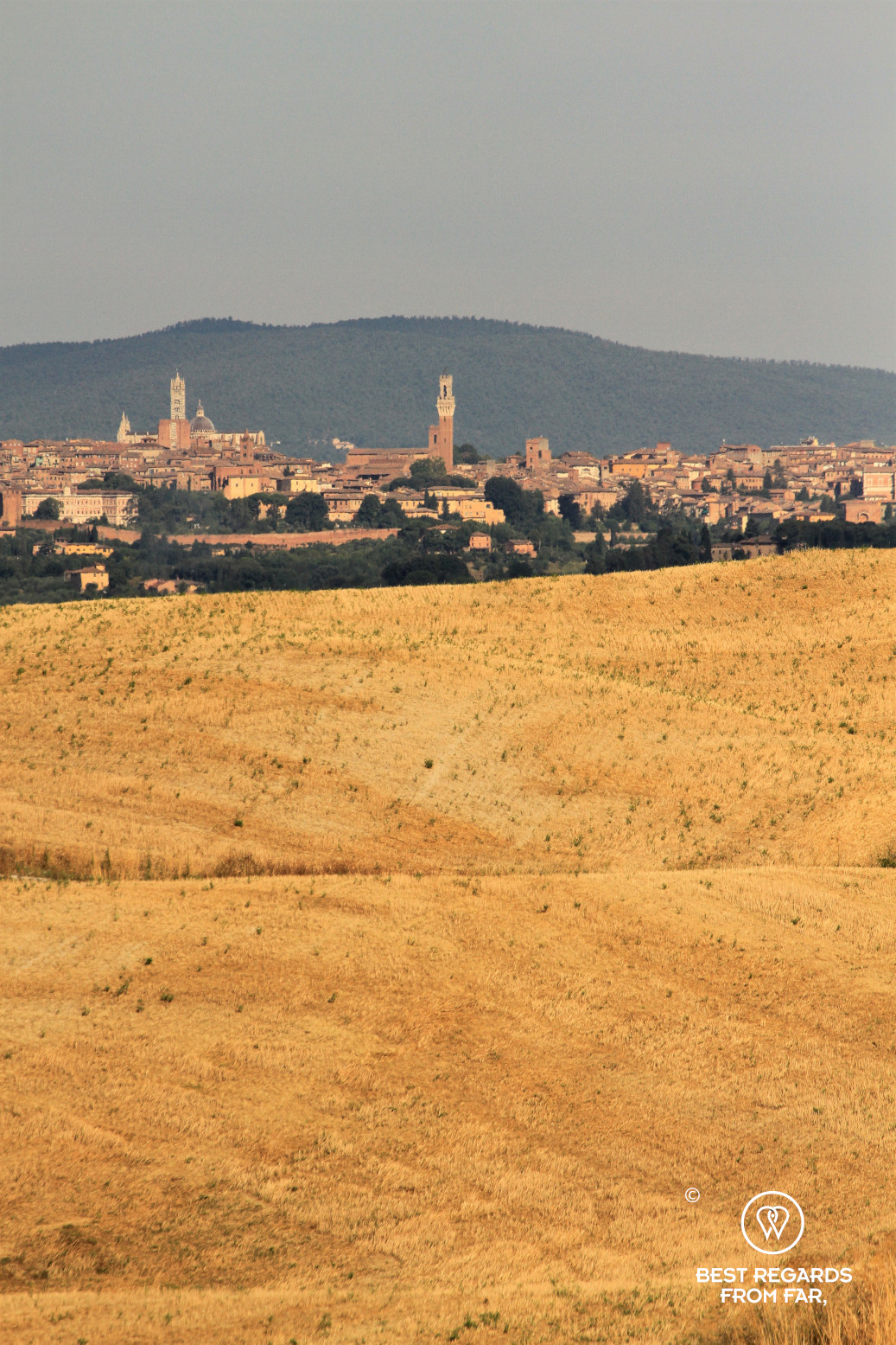 Wheat fields with the city of Siena in the background