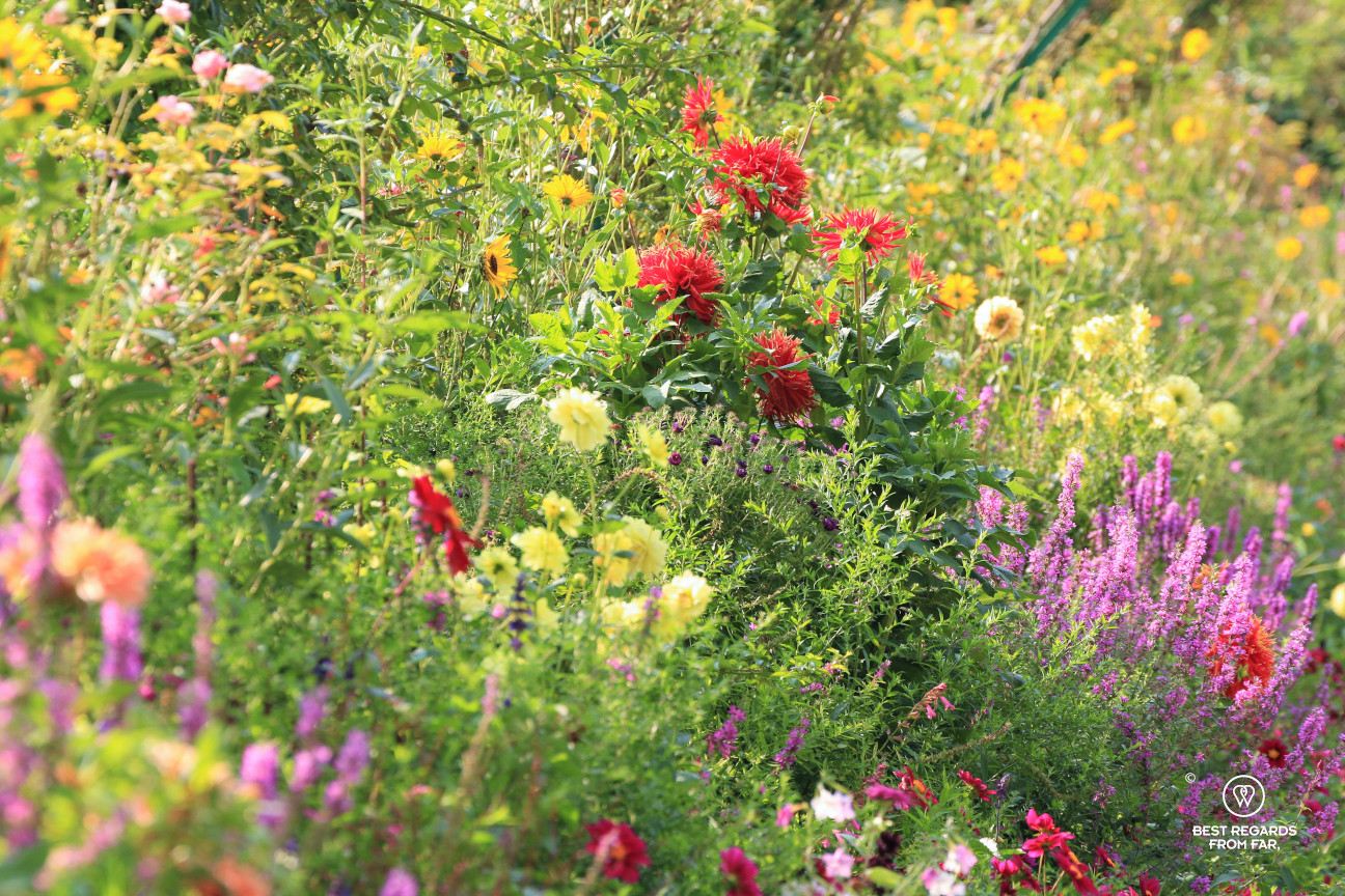 Flowers in Claude Monet's garden in Giverny, France